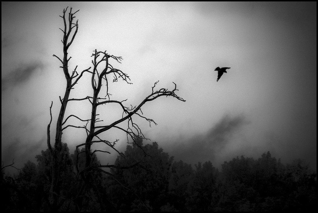 Прилетает по ночам ворон - Sergey_VK