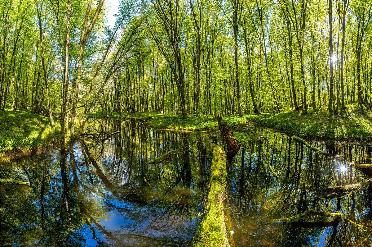 Пруд в весеннем лесу на Стрижаменте. - Фёдор. Лашков
