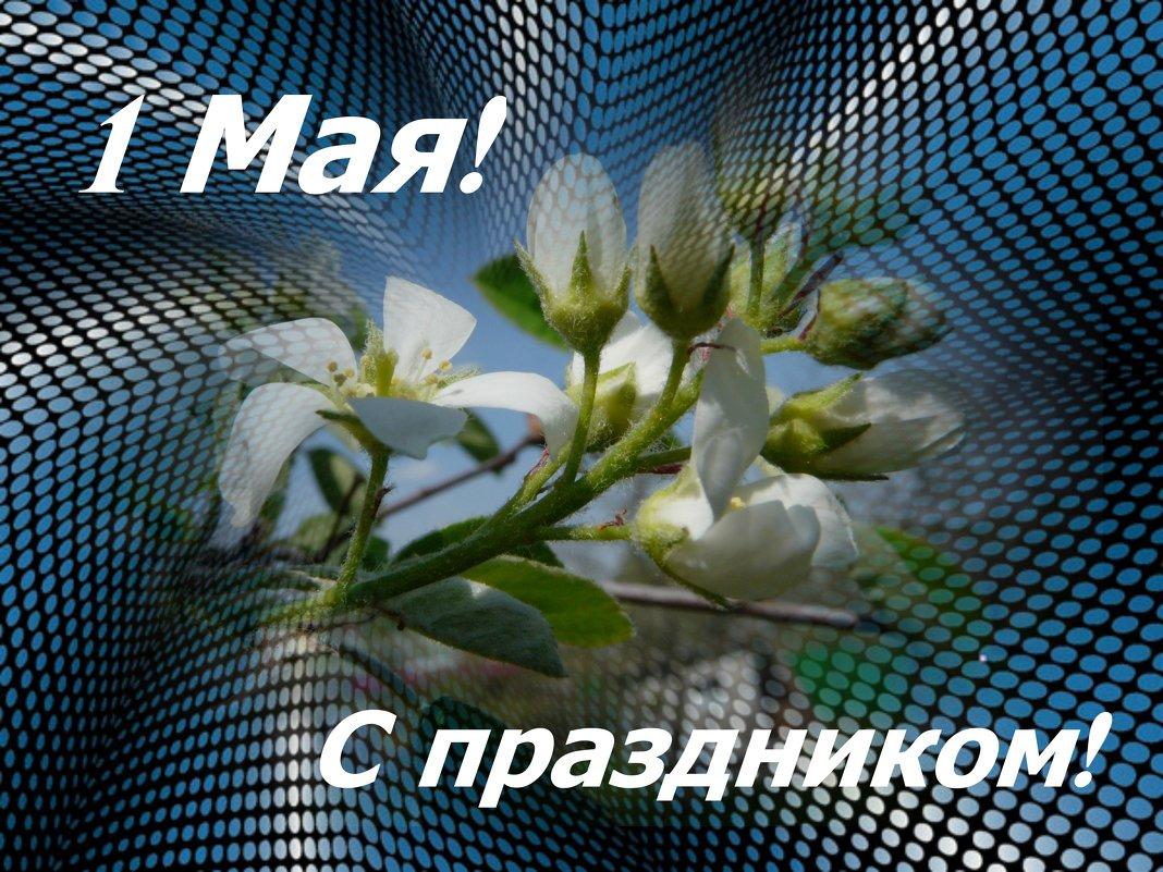 С праздником 1 Мая! - Наталья (Nata-Cygan) Цыганова