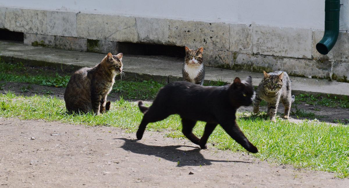 """""""А кошка отчасти идет по дороге, Отчасти по воздуху плавно летит."""" - Lena Loft"""
