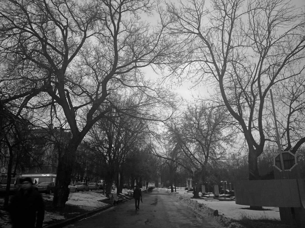 Ветви в тумане - Николай Филоненко