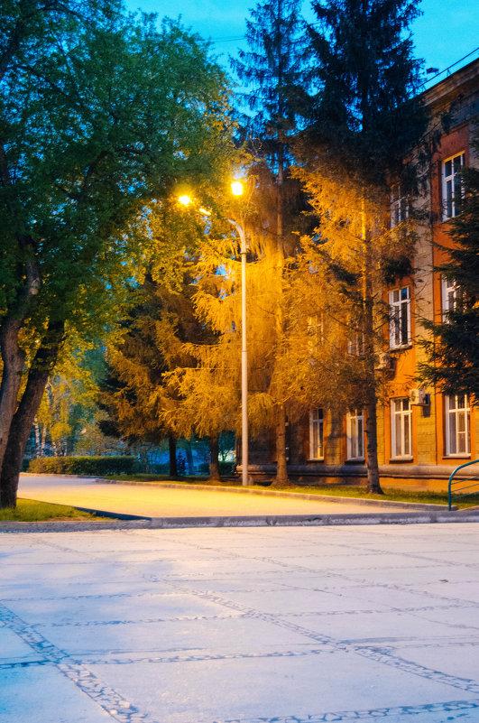 вечер,Новосибирск,фонарь - Света Кондрашова