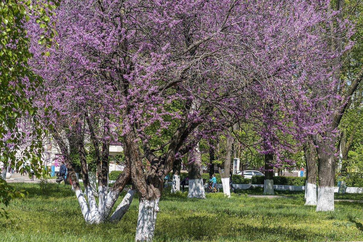 На улицах царит весна - Игорь Сикорский