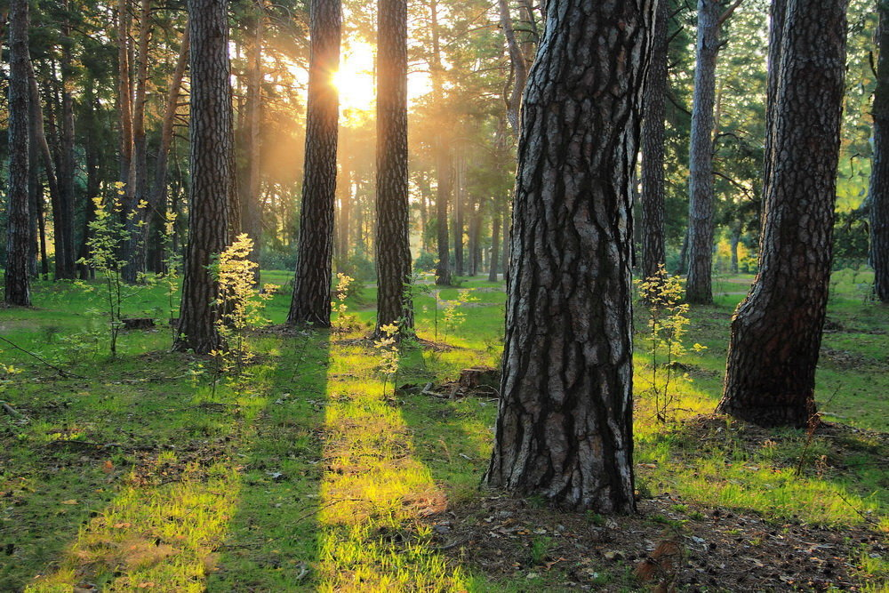 Уже не гостьей солнышко в лесу... - Лесо-Вед (Баранов)