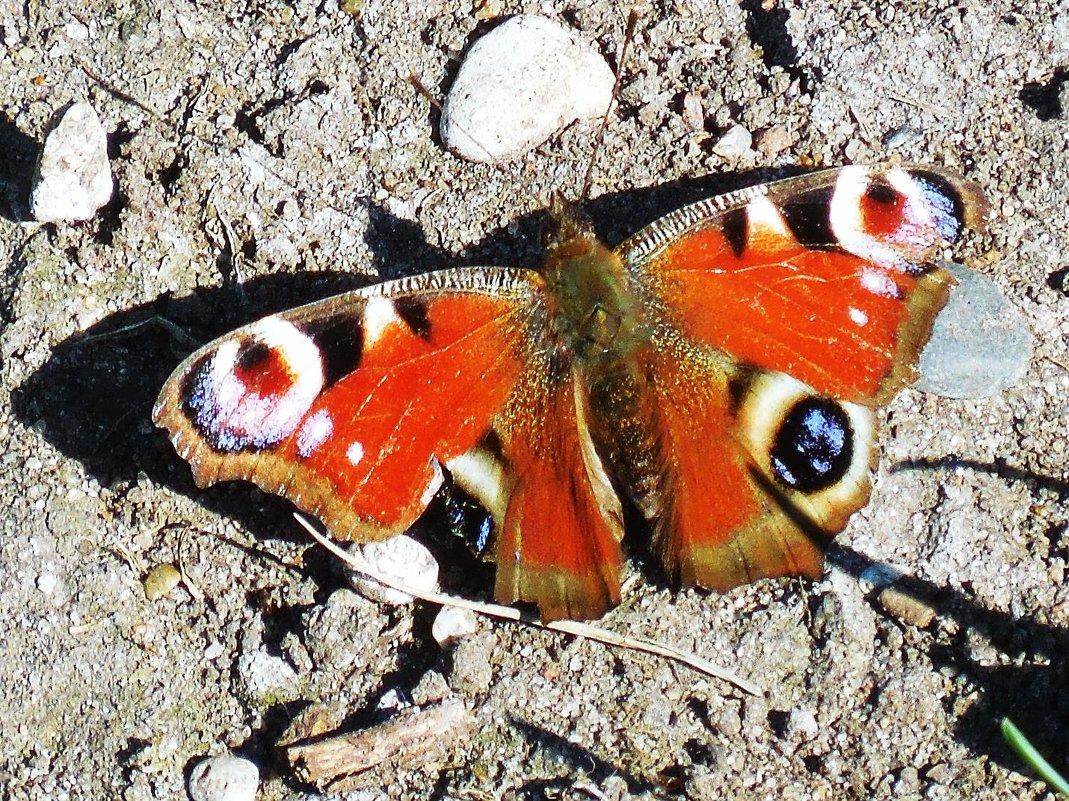 Бабочка на солнышке - Маргарита Батырева