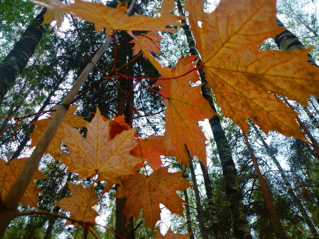 Осенний лес - Ihva