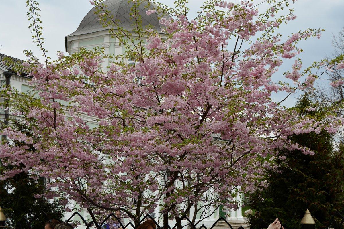 Весна в Царицыно - Любовь Зима