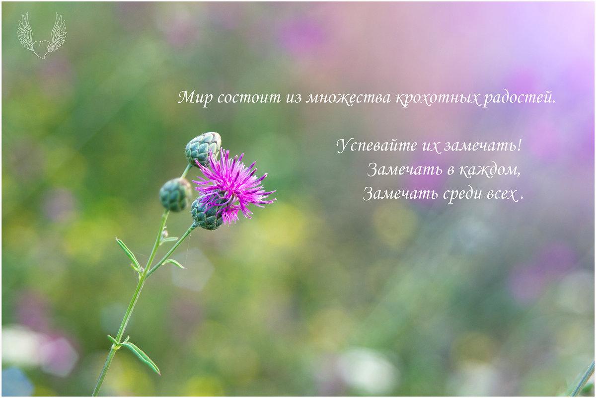 Сегодняшнее настроение ) - Райская птица Бородина
