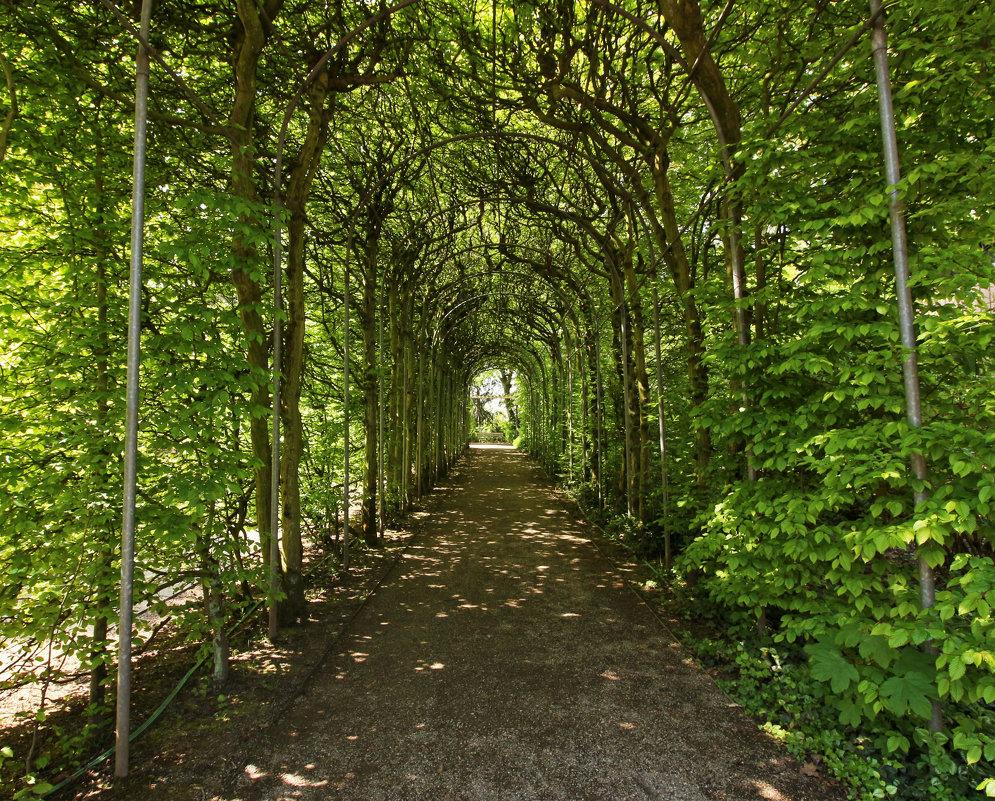 По зеленому тоннелю - Alexander Andronik