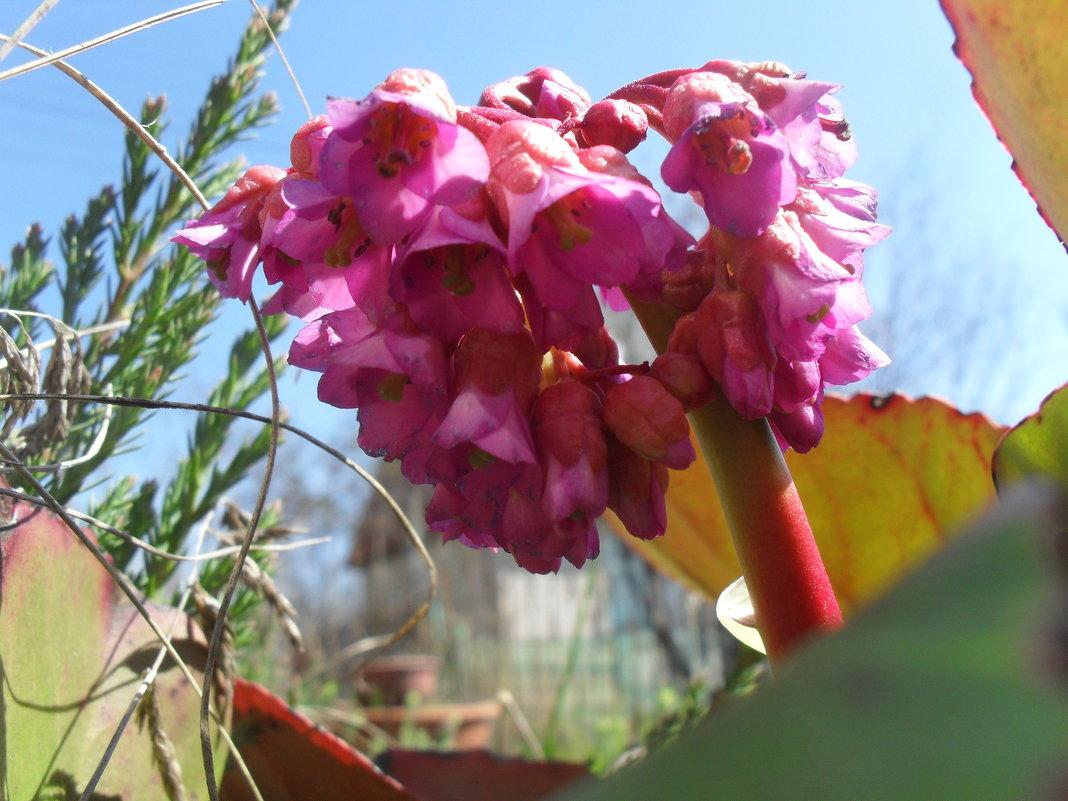 Весенние цветы - Анатолий