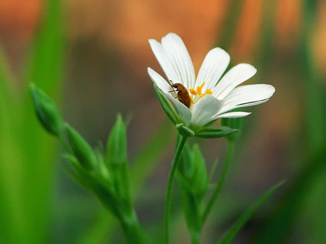 и в цветах водятся таракашки - Алиса Терновая