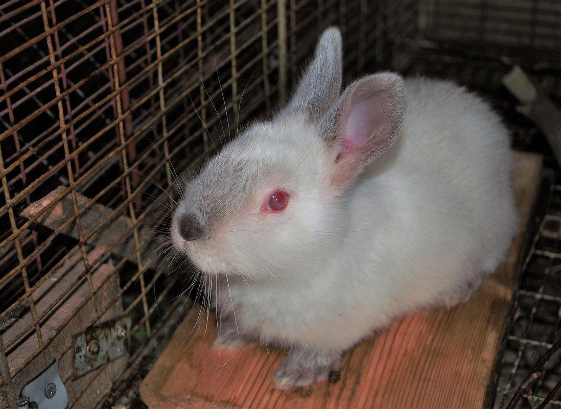 Крольчонок - Николай Масляев