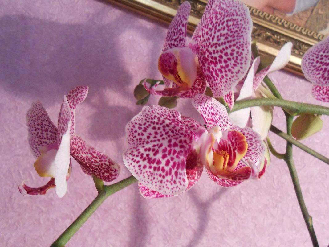 Орхидея - Яна Савина