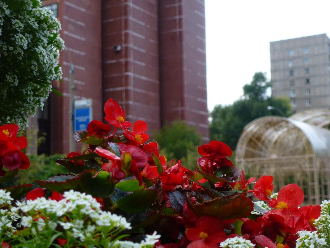 Цветы осени - Ihva