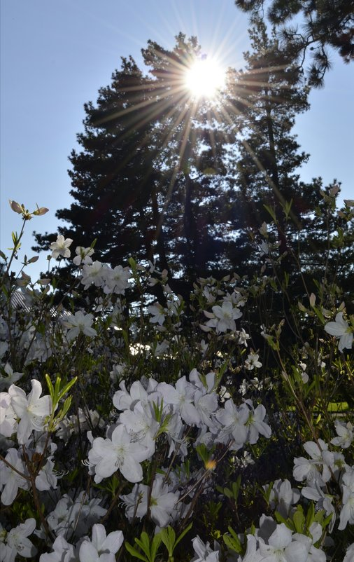 Свет уходящего солнца - Анастасия Меркулова