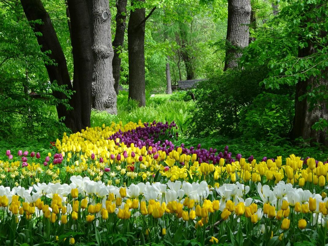 ТОП-7 самых красивых цветущих долин мира фото цветочных 18