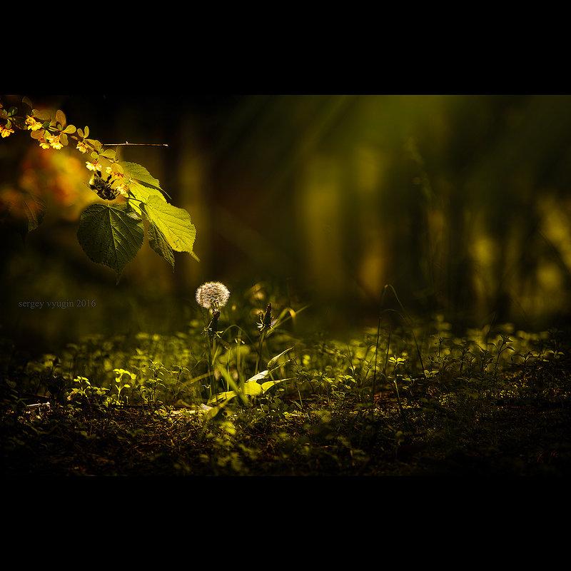 весна под ногами... - Сергей Вьюгин