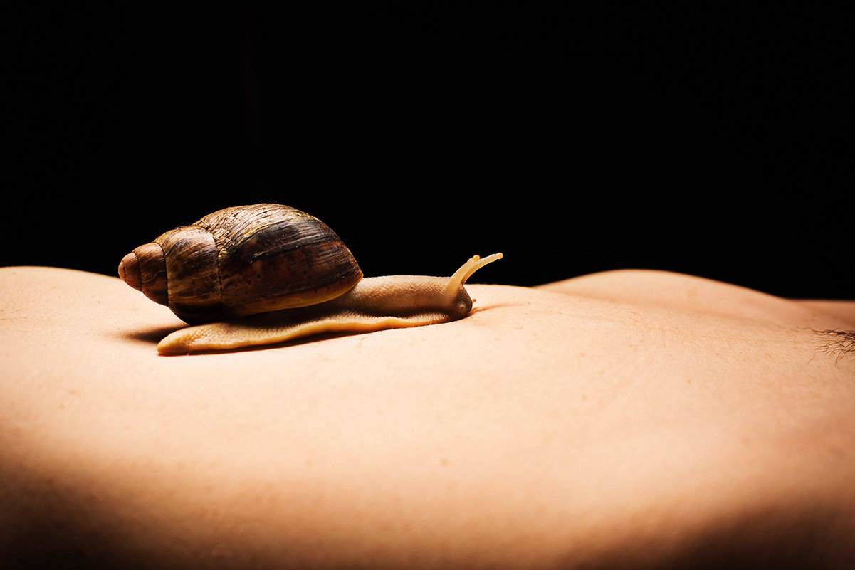 Snail - Сергей Голубев