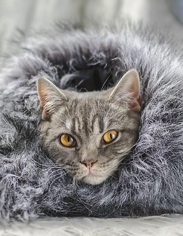 Пришли холода. - Анна Никонорова