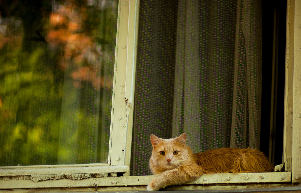 Мой сосед. - Ольга