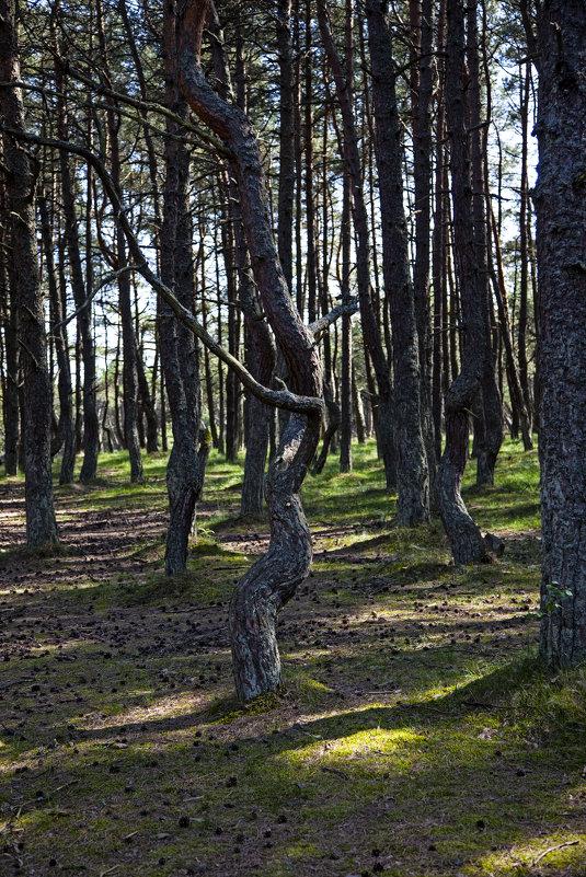 Танцующий лес - Михаил Калакуцкий