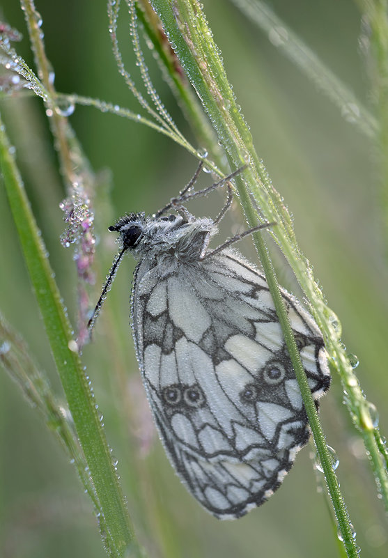 Утро бабочкино - Александр Земляной