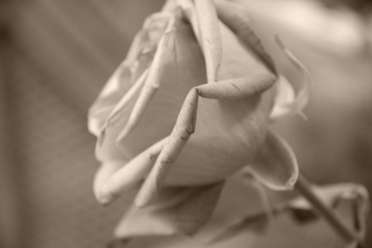 Роза и пепел - Нина
