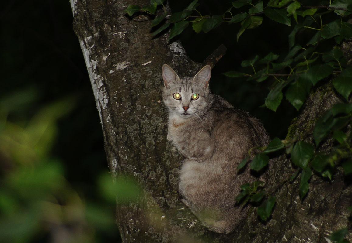 Кошка - Михаил Танин