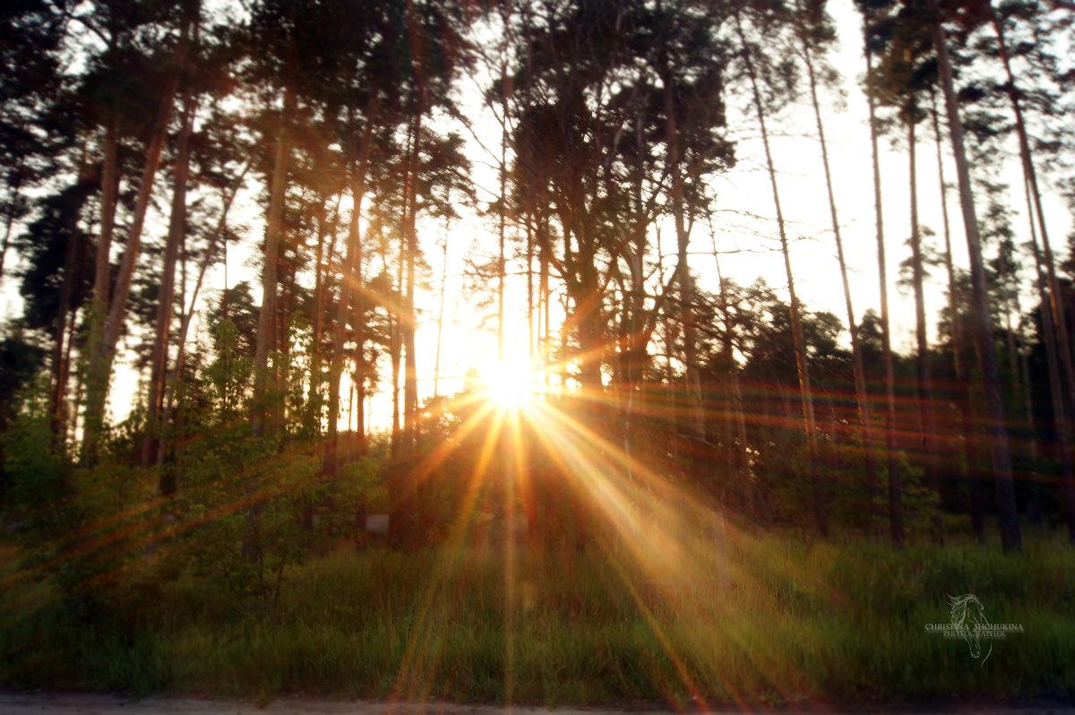 Заход солнца - Кристина Щукина