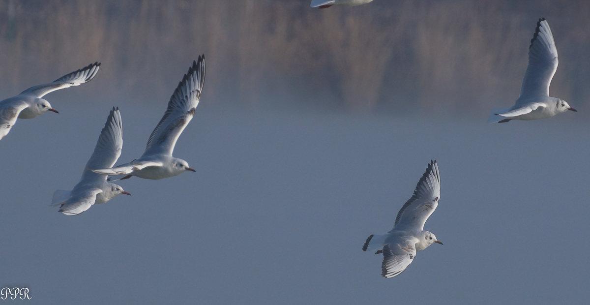 Туманным утром - Павел Руденко