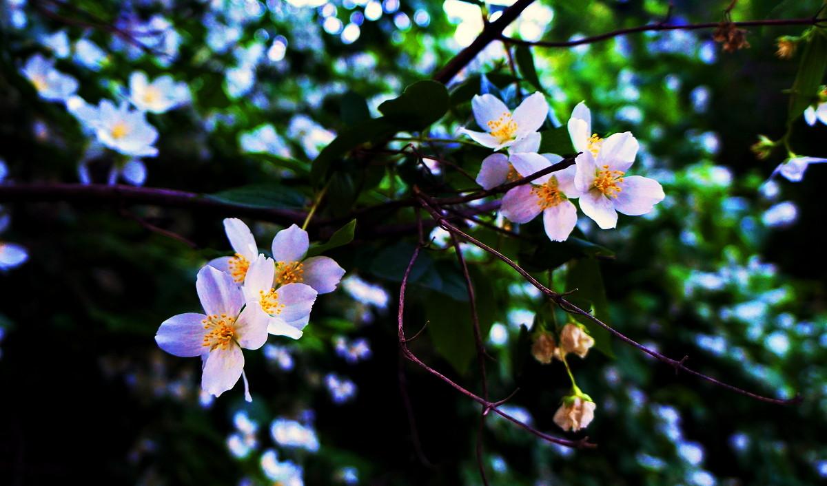 Цветы - Ashotto Kolpakovski