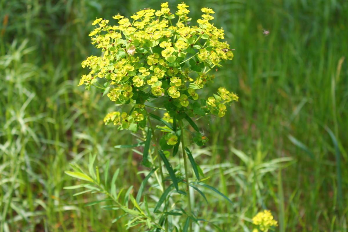Желтый цветочек - Ксения Бреева