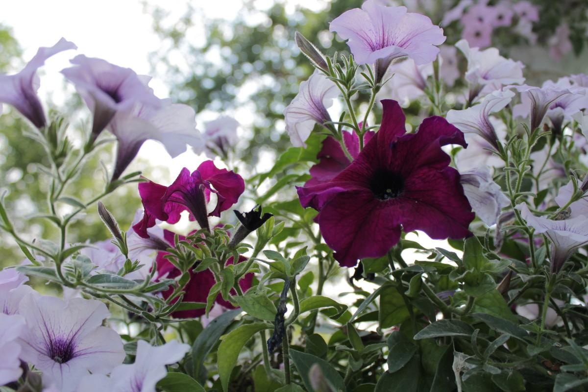 Яркие цветы - Ксения Бреева