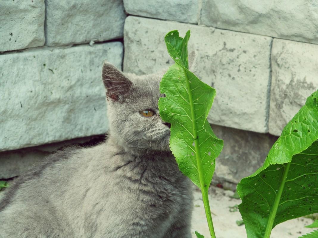 Кошка - Леся Сварицевич