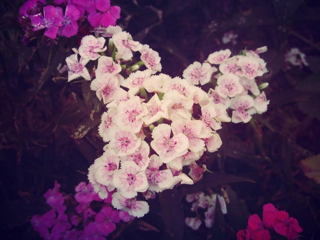 Цветы - Леся Сварицевич