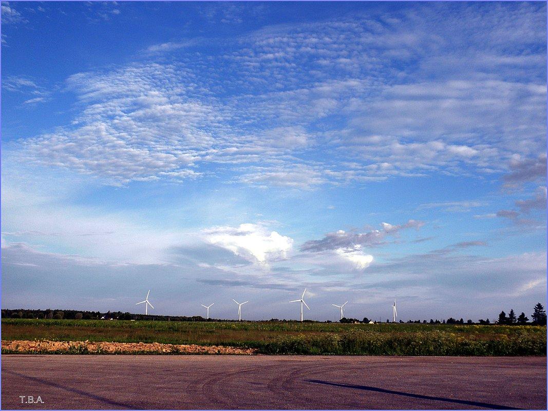 Небо Эстонии - Вера