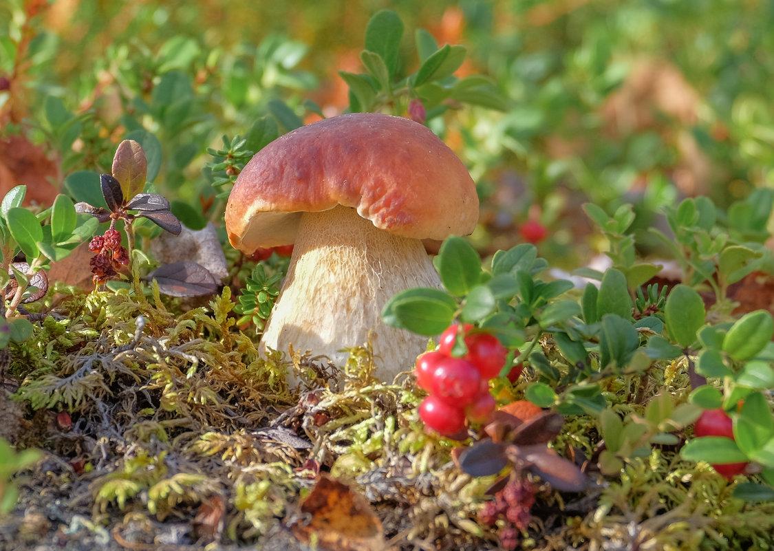 Белый гриб - Олег Кулябин