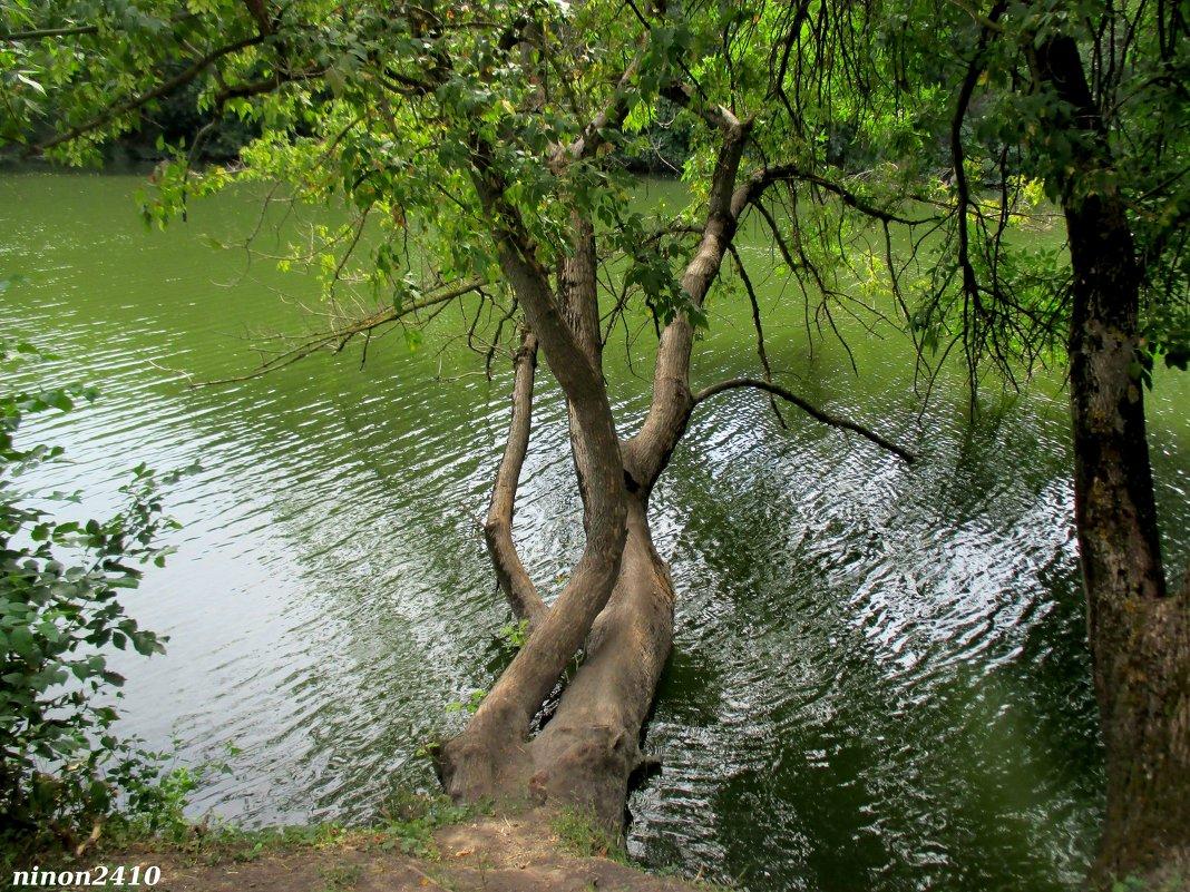 Река Темерник в парке Октября - Нина Бутко