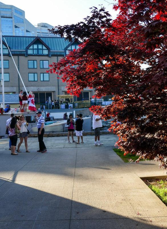 Национальный флаг Канады даже на платье.... - Юрий Поляков