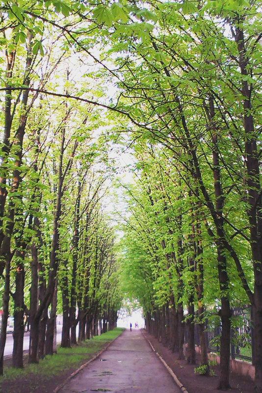 Красивые деревья - Сергей Дубовик