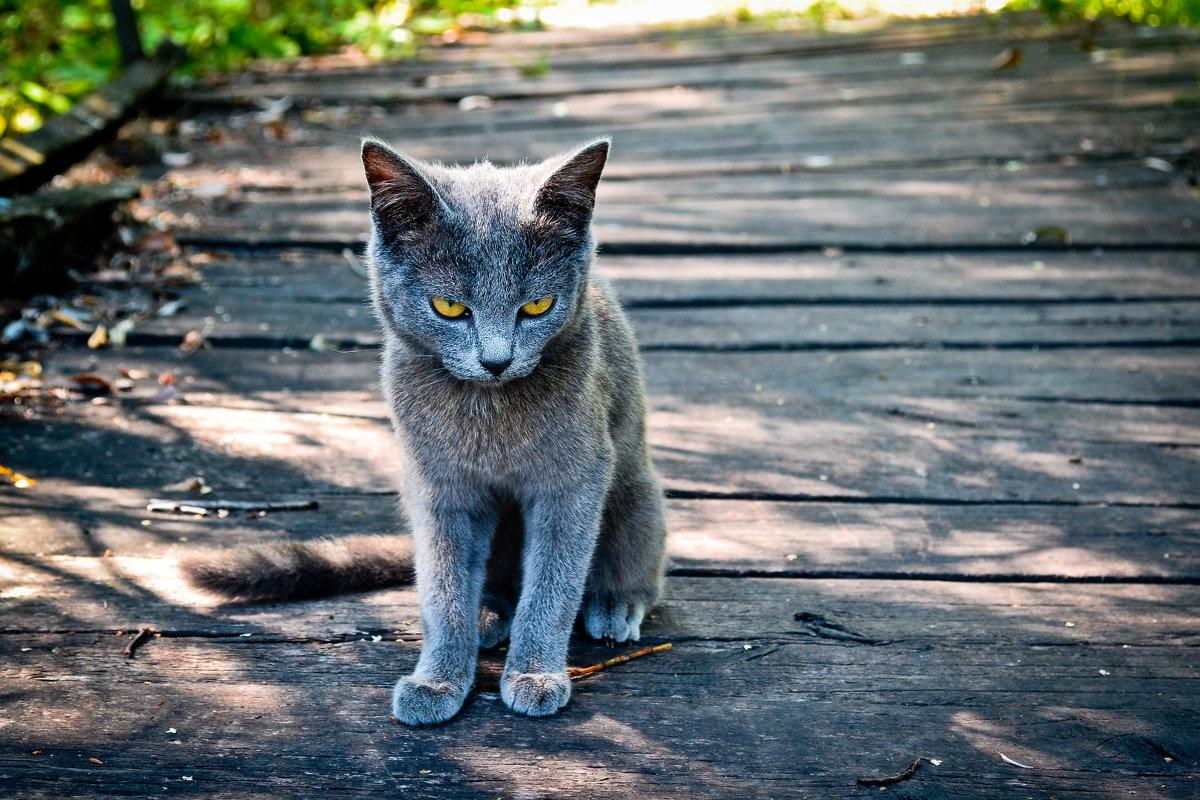 Суровый,хищный взгляд - Ирина