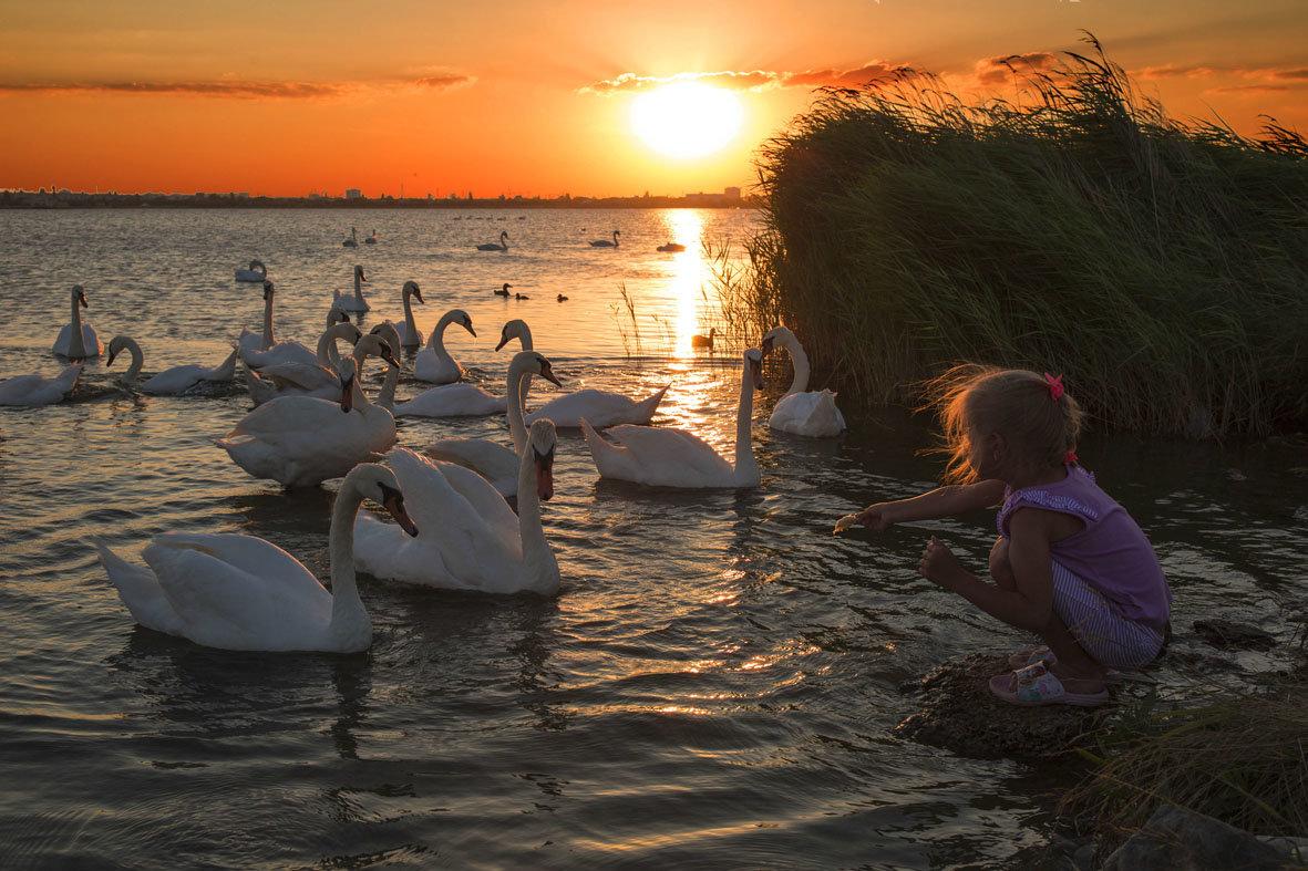 Лебединое озеро. - Svetlana Sneg