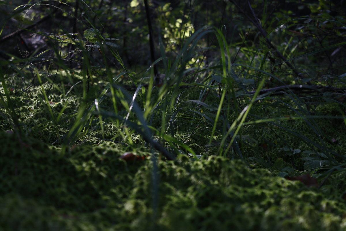 мох в лесу - andrew585 585