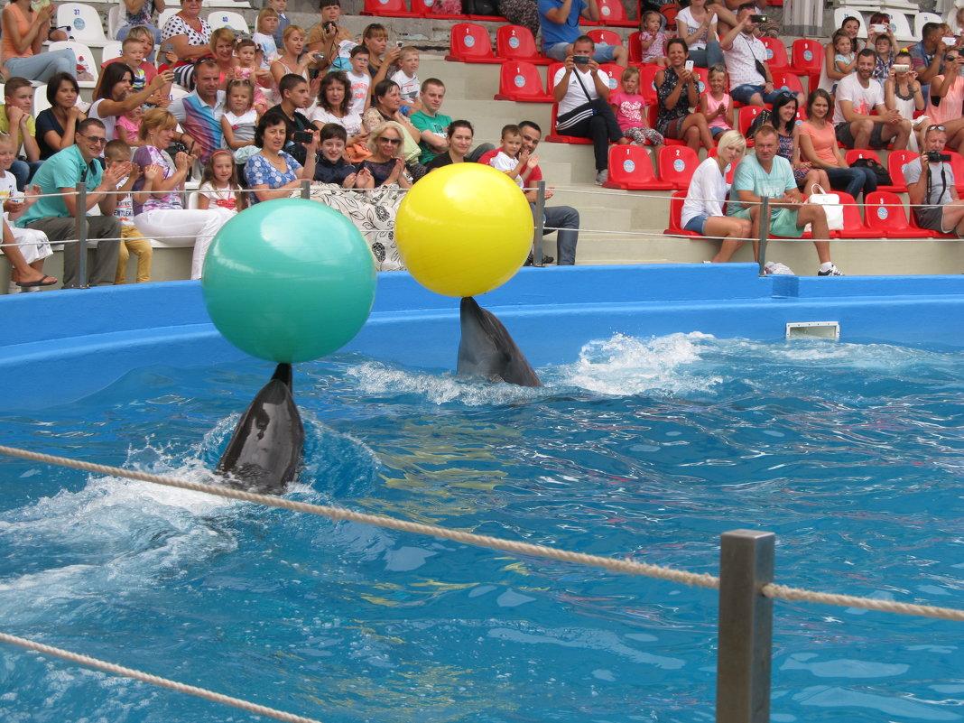 Дельфины - Яна Чепик