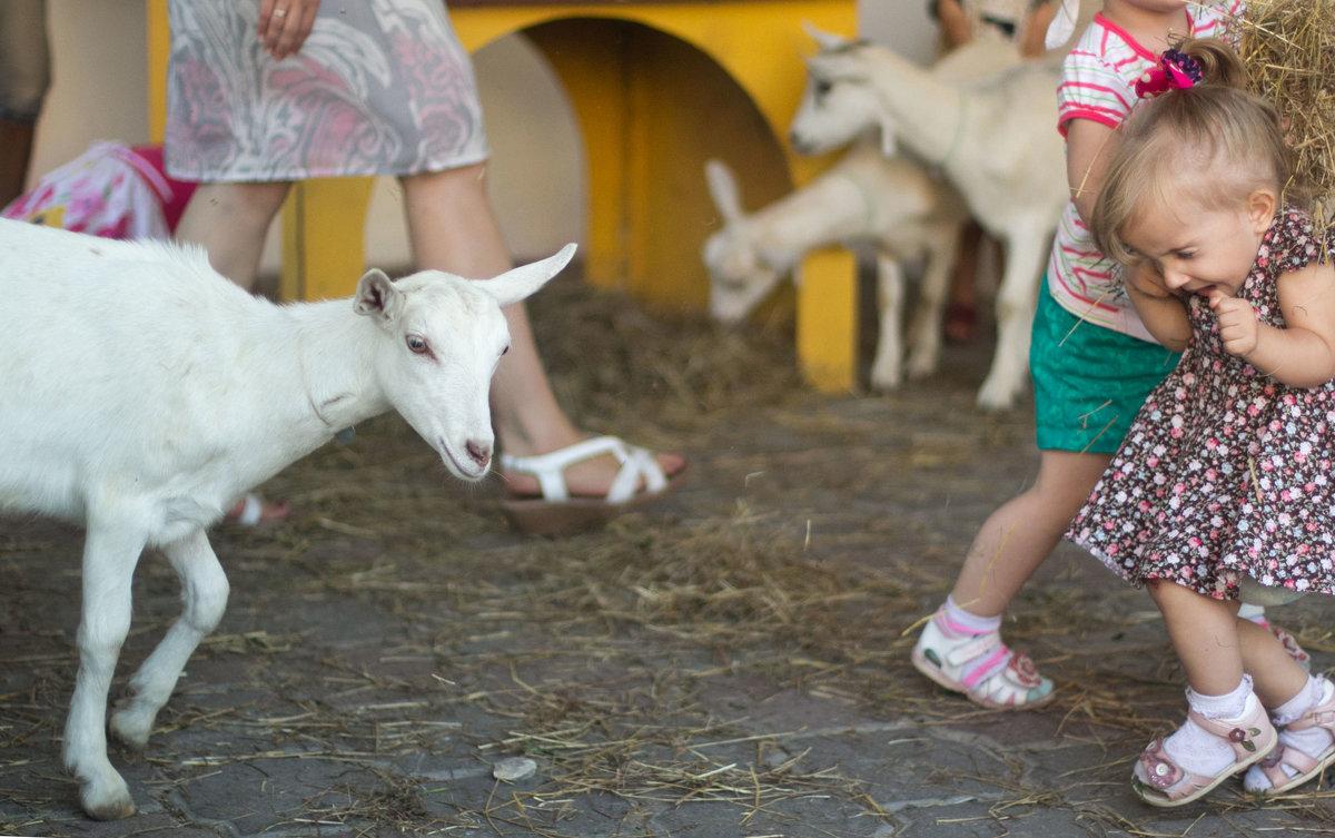 идёт коза рогатая .... ) - Светлана З