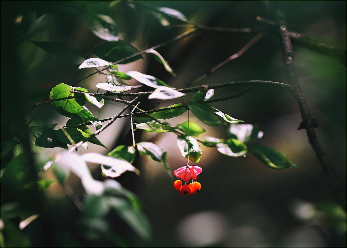 бересклет - Эльмира Суворова