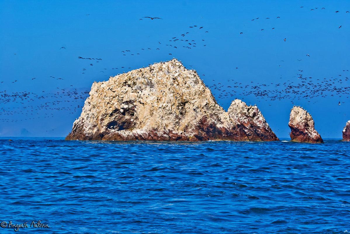 Перу. «Масло-туманистый» океан птичьих островов Балестас - Андрей Левин