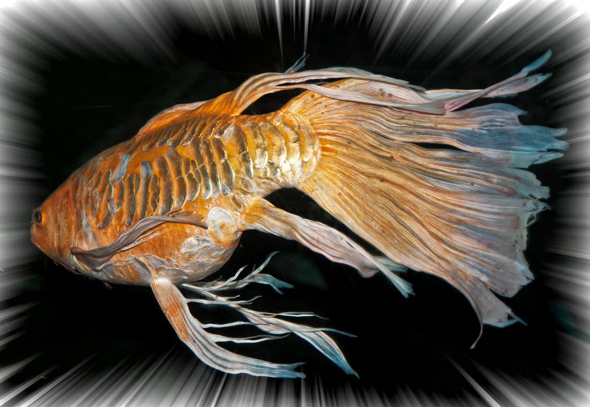 Золотая рыбка - Alexander Demetev
