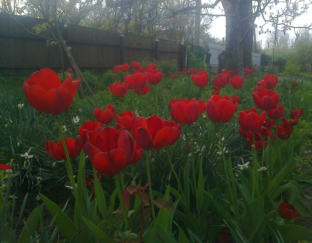 Кусочек воли в саду - Lera Yurievna