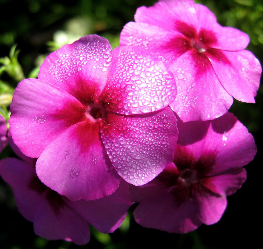 Цветы - Дмитрий Арсеньев